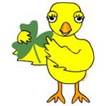 Shamrock Chick