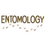 Entomology Ants